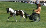 Offering a variety of services for Miniature Horses and their Humans