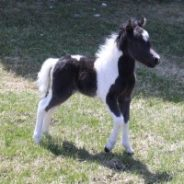 MHCO Foal Fundraiser – Place your bids now!